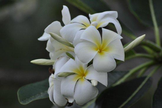 Q Signature Samui Beach Resort: Beautiful flowers in the gardens