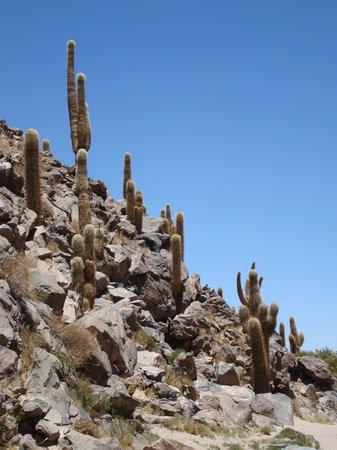 Awasi Atacama - Relais & Chateaux: Cactus canyon