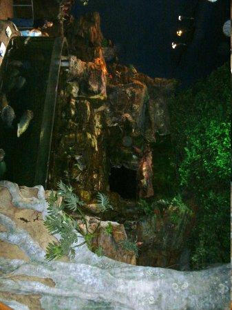 Ripley's Aquarium of the Smokies: Ripley's Aquarium of the Smokies
