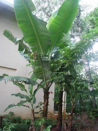 Sol Cataratas Hotel: camino a la habitación lleno de vegetación