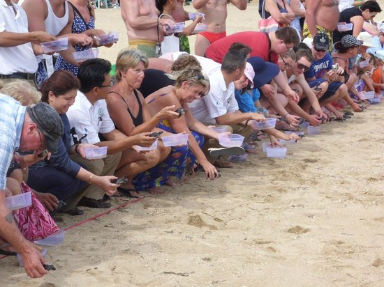 Prama Sanur Beach Bali: releasing baby turtles on the beach