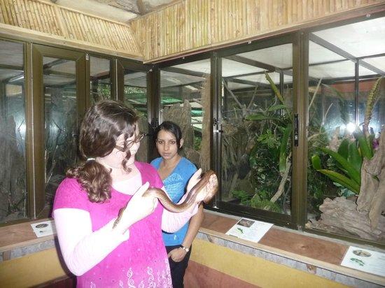 Arenal Eco Zoo: Snake handler