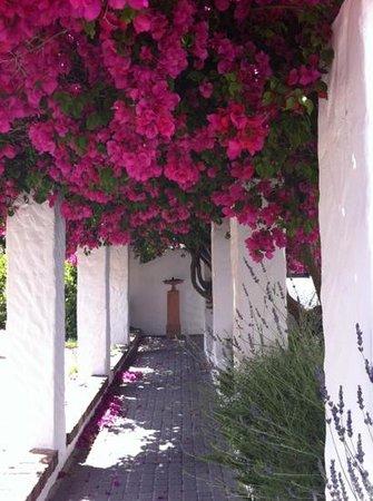 Montrose Guesthouse: auf dem Weg zum Eingang herrliche Buganvilla