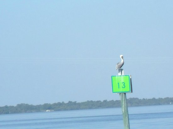 Space Coast River Tours: Pelican