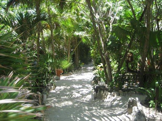 Posada Ecologica Dos Ceibas: diese Wege führen zu den einzelnen Hütten