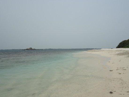 Seaway Hotel: pegeon island