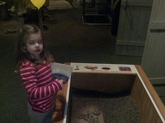 "Anniston Museum of Natural History: ""Digging"" for fossils in the kid's area called Nature Space."