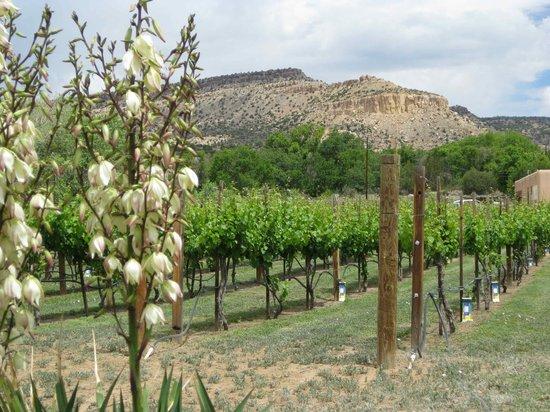 San Fidel, NM: Riesling Vineyards