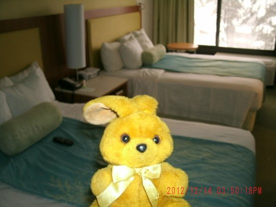 SpringHill Suites Flagstaff: Mike Thebunny in room