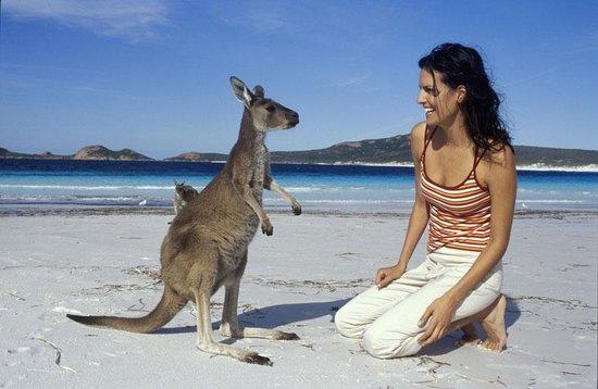 Australia It Is Dog Day