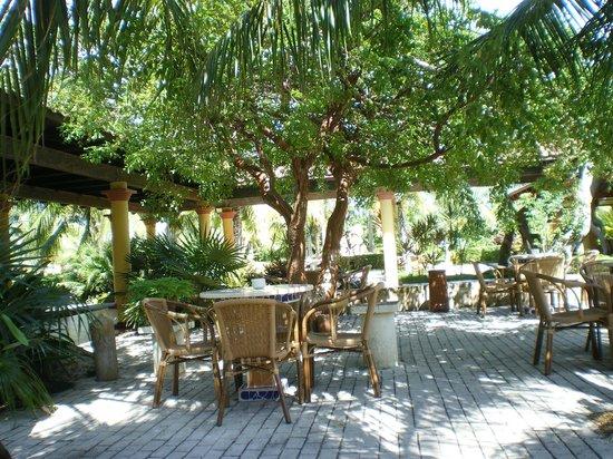 Melia Cayo Santa Maria : My favourite ,morning spot