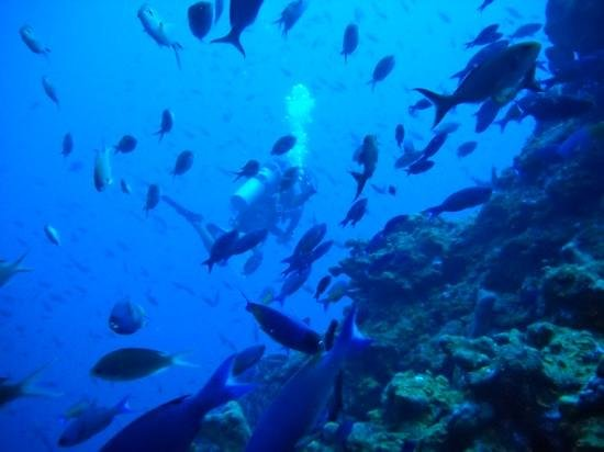 Saba Divers: Diving on Saba.