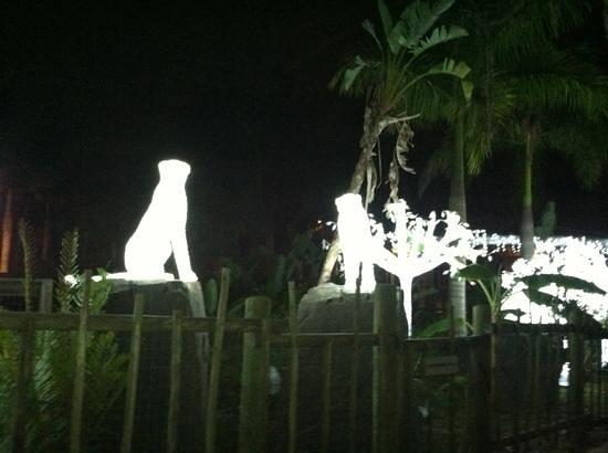 Tampa's Lowry Park Zoo: Lowry Park Zoo winter wander land!