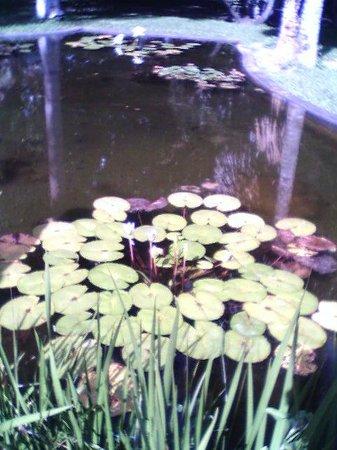 Jardín Botánico: Jardin Botanico