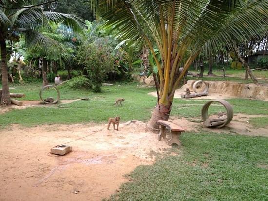Lanta Monkey School: monkey garden