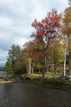 Northern Pride Lodge & Campground: Fall colours