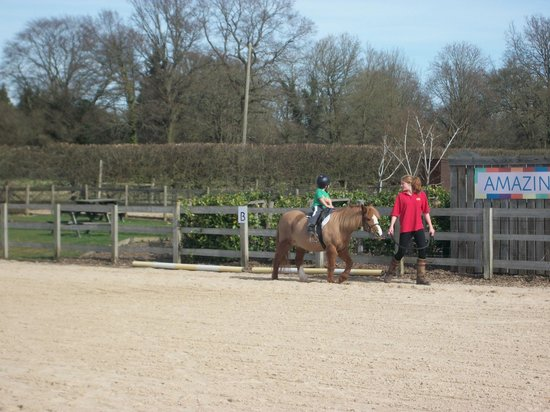 Fishers Farm Park: Ride him cowboy