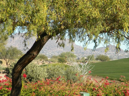 JW Marriott Scottsdale Camelback Inn Resort & Spa: View from Pool area..golf course