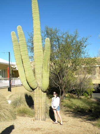 JW Marriott Scottsdale Camelback Inn Resort & Spa: Big Cactus on grounds