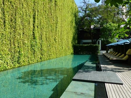 137 Pillars House Chiang Mai: Poolside with awesome green vegitation wall