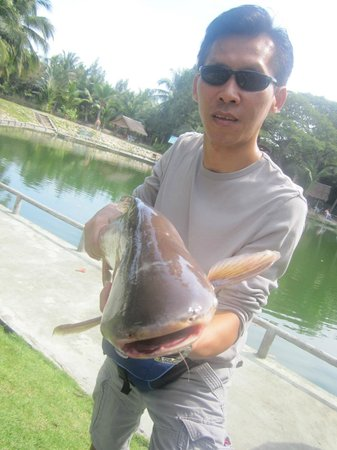 ‪‪Hua Hin Fishing Lodge‬: smaller catfish‬