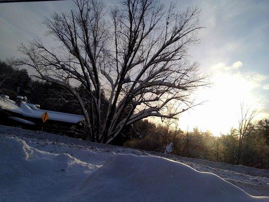 Hotel Alpine Inn: Magnifique arbre au lever du soleil