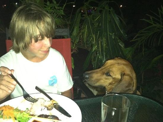 Pacifico Azul : jaeger, the restaurant dog (this is typical costa rica)