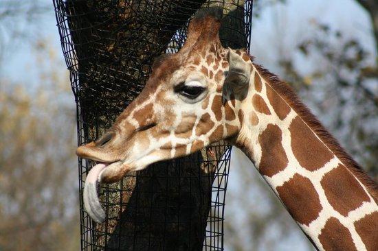 Brookfield Zoo: self explanatory