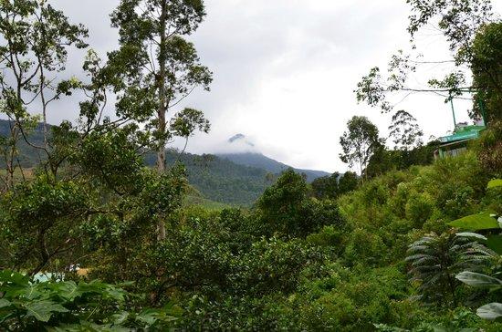 Slightly Chilled: Vue de l'Adam's Peak
