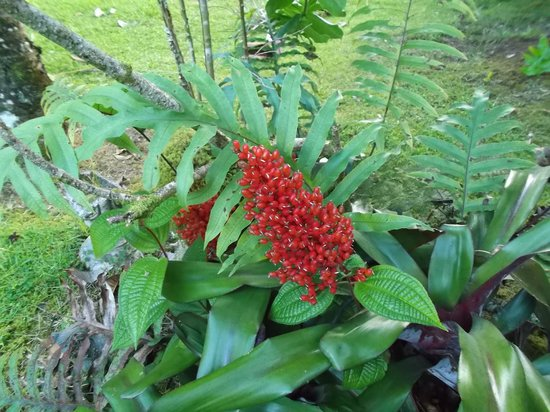 Lava Tree Tropic Inn: this flower was in front of the house