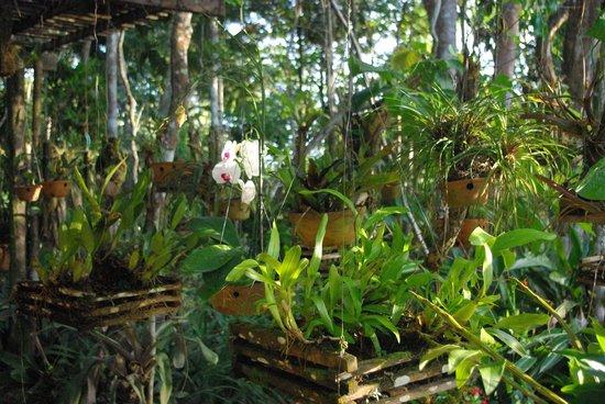 Casa Natureza Brasil: Jardin aux orchidées