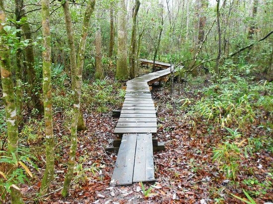 Havelock, Carolina del Norte: Boardwalk on Neusiok Trail