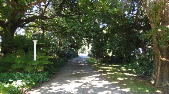 Boscobel of Ulverstone Bed & Breakfast: Tree-lined driveway