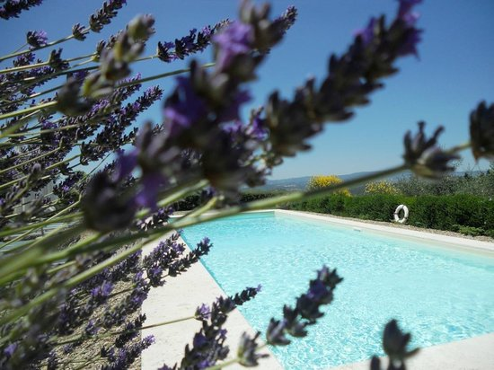 Torre di Ponzano - Chianti area - Tuscany -: Lavender around the pool