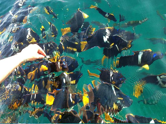 Marriott Puerto Vallarta Resort & Spa: Feeding the fish