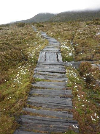 Hartz Mountains National Park: Boardwalk on the way to Ladies Tarn