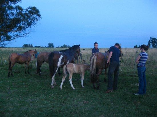 El Galope Farm & Hostel: Preparacao para a cavalgada, uma outra vez