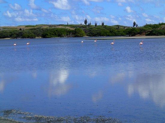 Boca Slagbaai: Flamingos