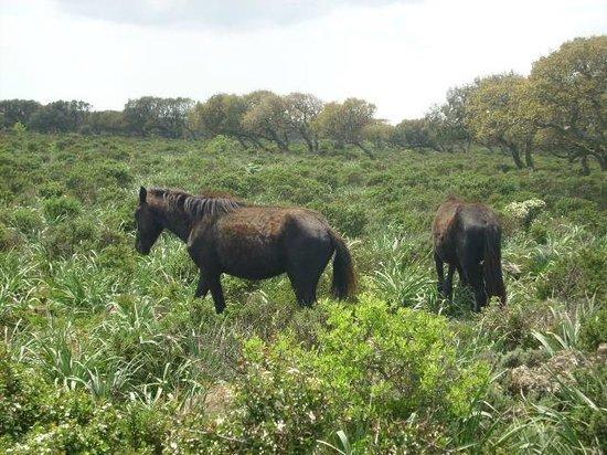 Giara di Gesturi - Escursioni a Cavallo: cavallini2