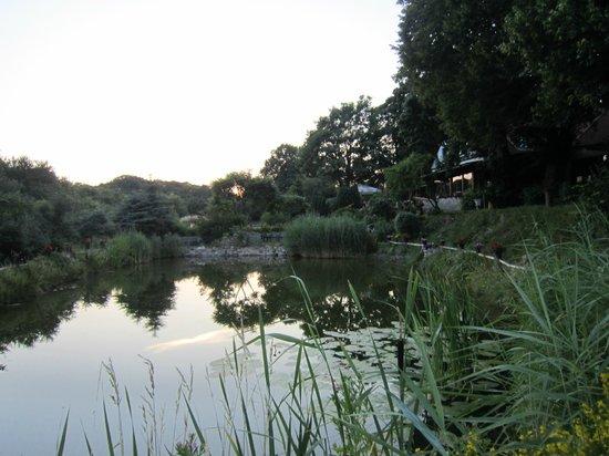 Lurschau, ألمانيا: Hotel carp pond 