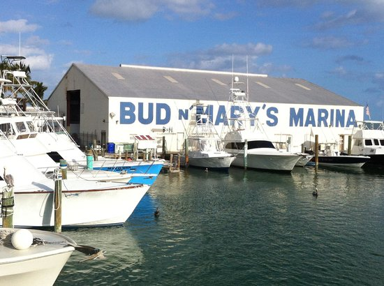 Jack picture of bud n 39 mary 39 s sportfishing marina for Bud n mary s fishing report