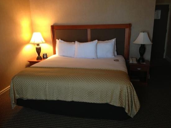 DoubleTree by Hilton & Miami Airport Convention Center: king size bed - clean and comfortable.