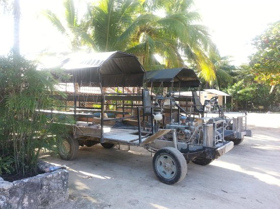 Hidden Worlds Family Cenote Park: Buggies