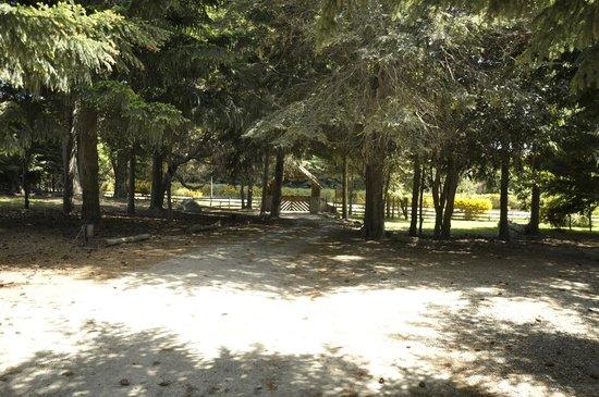 Peninsula Petit Hotel: Jardin
