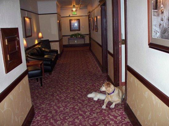 Hotel Arcata : Dog friendly!