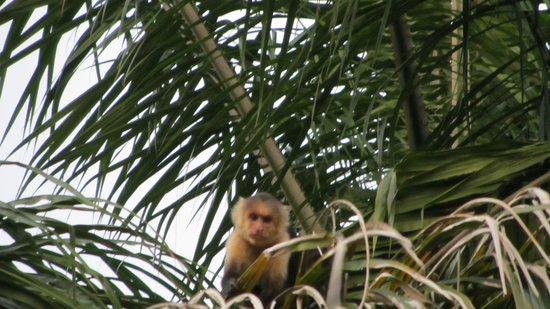 Byblos Resort & Casino: funny monkeys visit the hotel