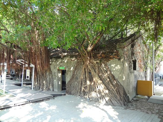 Maison arboricole d'Anping : Anping Tree House