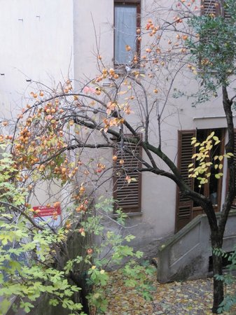 La Residenza dell'Orafo: Persimon tree outside the window