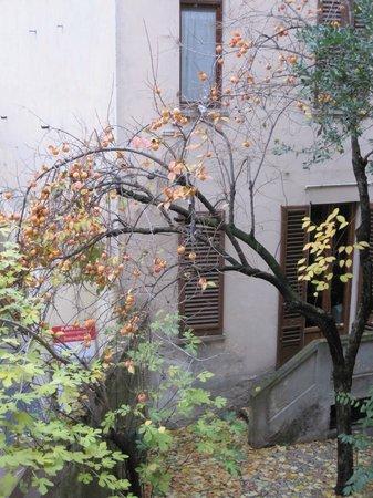 ลาเรซสิเดนซ่า เดลโลราโฟ: Persimon tree outside the window