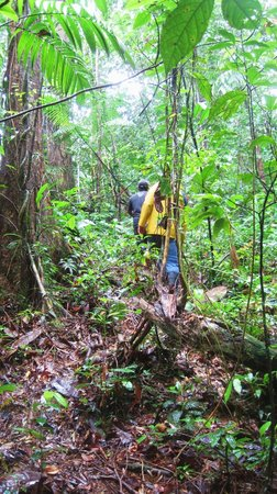 بوبا بارادايس بيتش ريزورت: Jungle Stumble 
